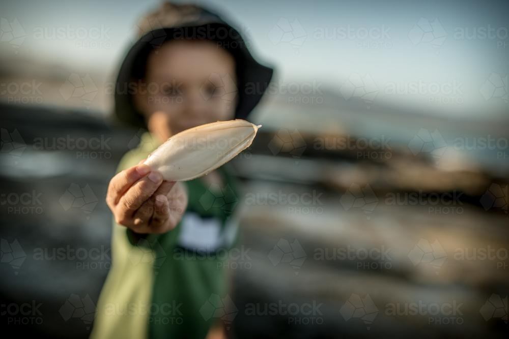 4 year old mixed race boy finds a cuttlefish bone on a rocky coast - Australian Stock Image