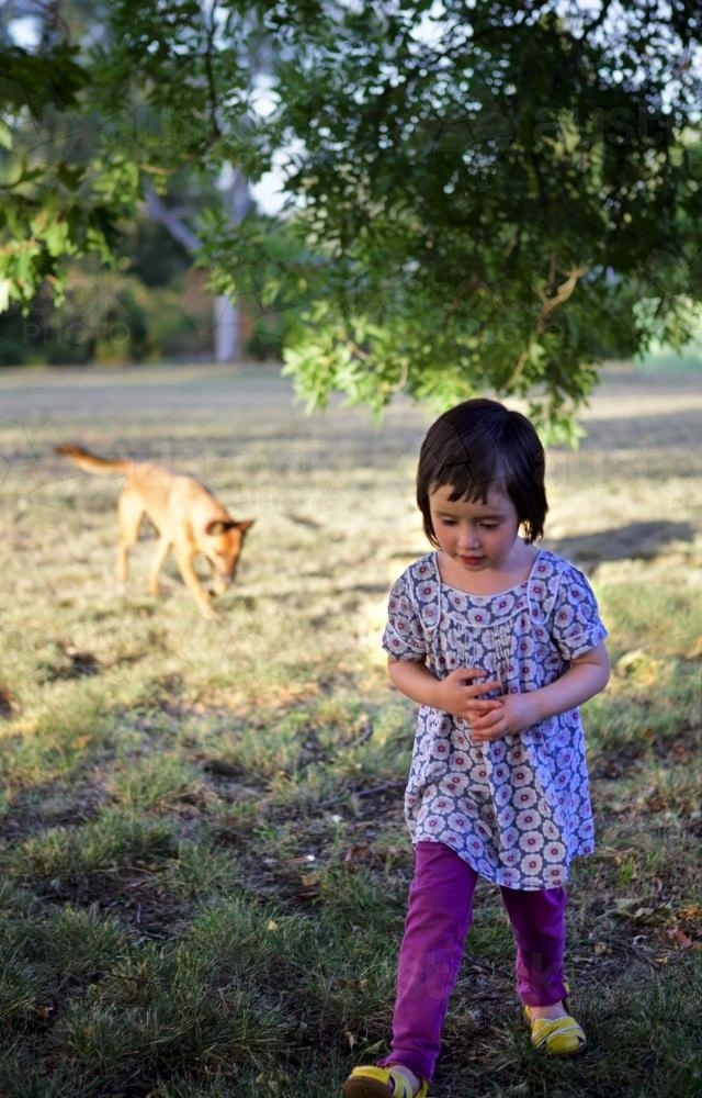 A young girl playing with a dog under a tree at sunset - Australian Stock Image
