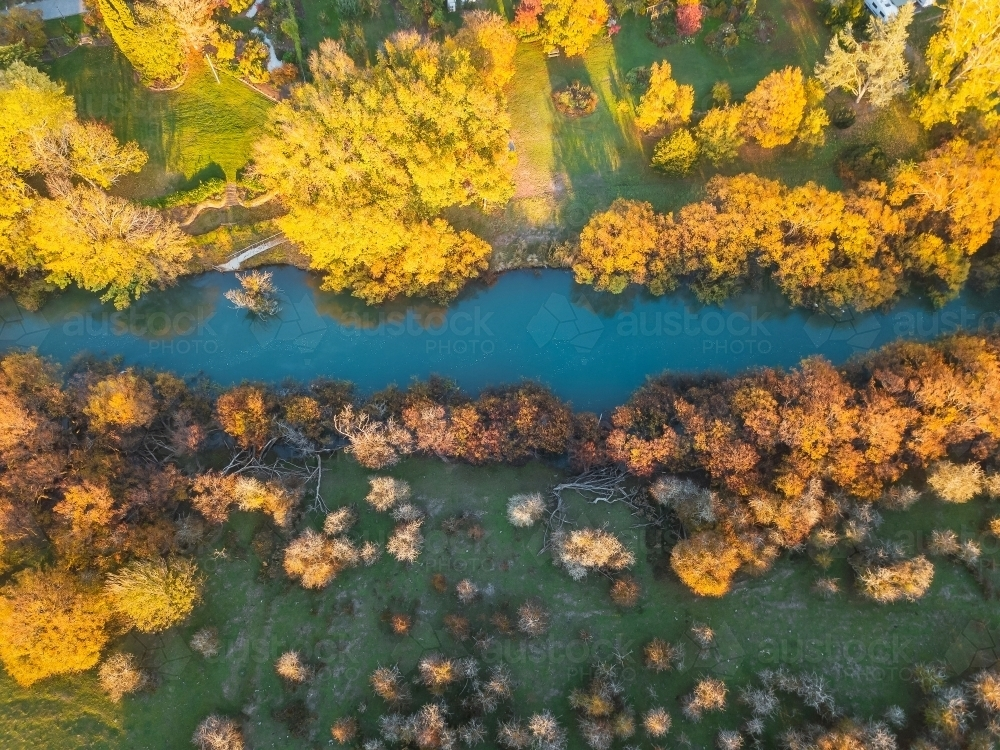 Aerial view of golden trees lining the banks of a river in Autumn - Australian Stock Image