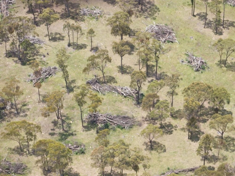 Aerial view of scattered gum trees amongst piles of fallen trees - Australian Stock Image