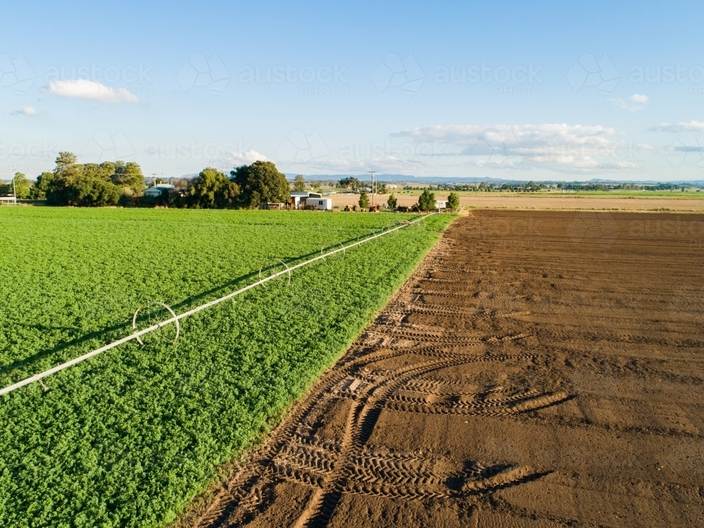 Afternoon sunlight on farm paddock and irrigation system sprinkler - Australian Stock Image