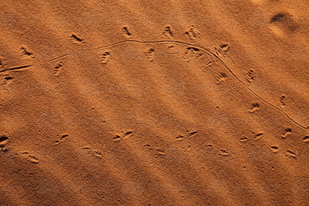 Animal tracks in the sand - Australian Stock Image