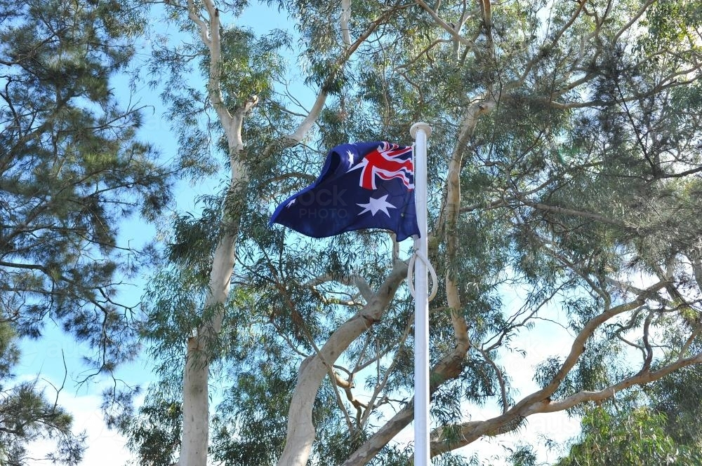 Australian Flag with Gum Trees - Australian Stock Image