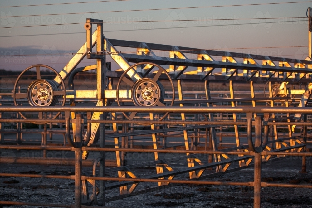 Automatic cattle gate at dairy - Australian Stock Image