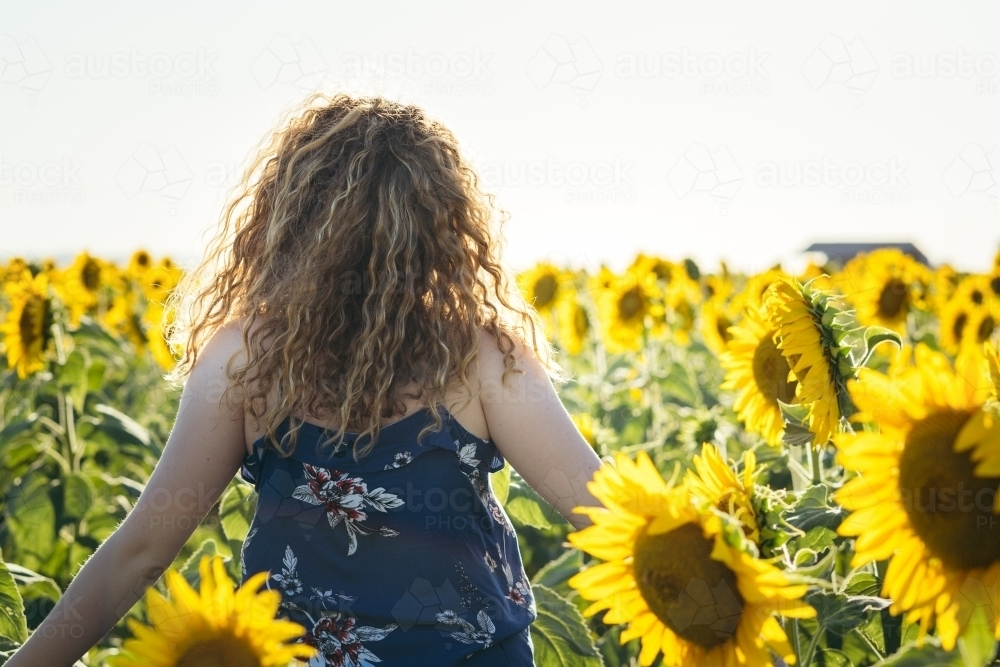 Back view of young woman walking through sunflower field - Australian Stock Image