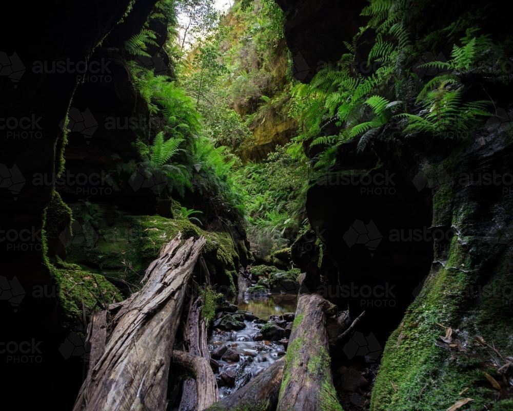Beautiful narrow green mossy canyon in Blue Mountains National Park - Australian Stock Image