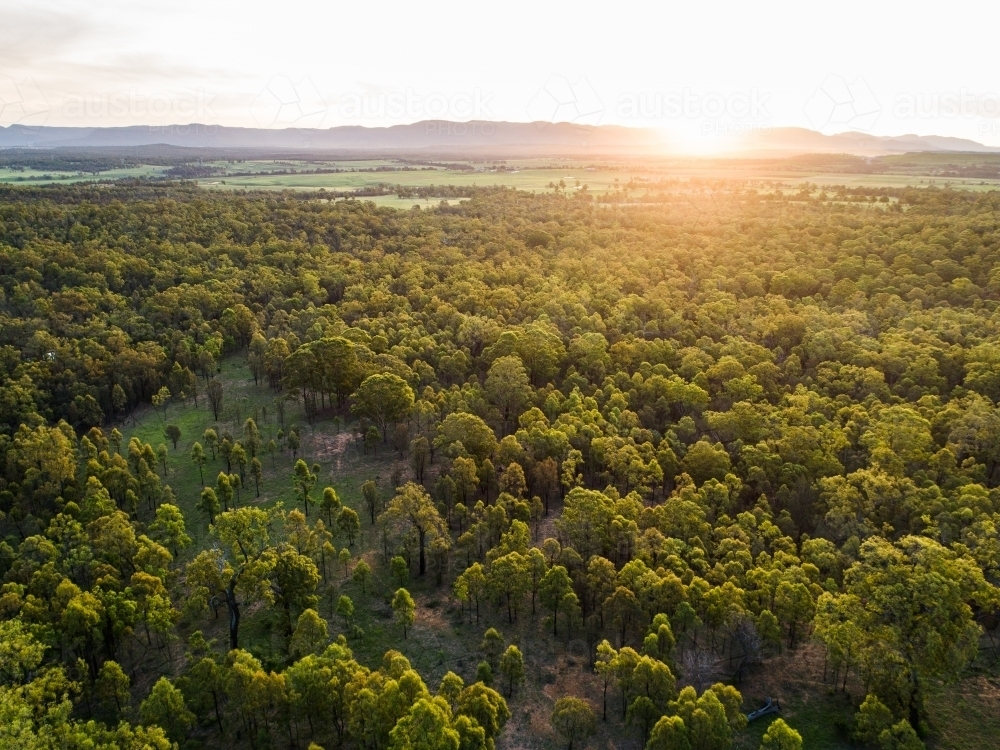 Beautiful sunset light over landscape of trees and farm land in Hunter Valley - Australian Stock Image