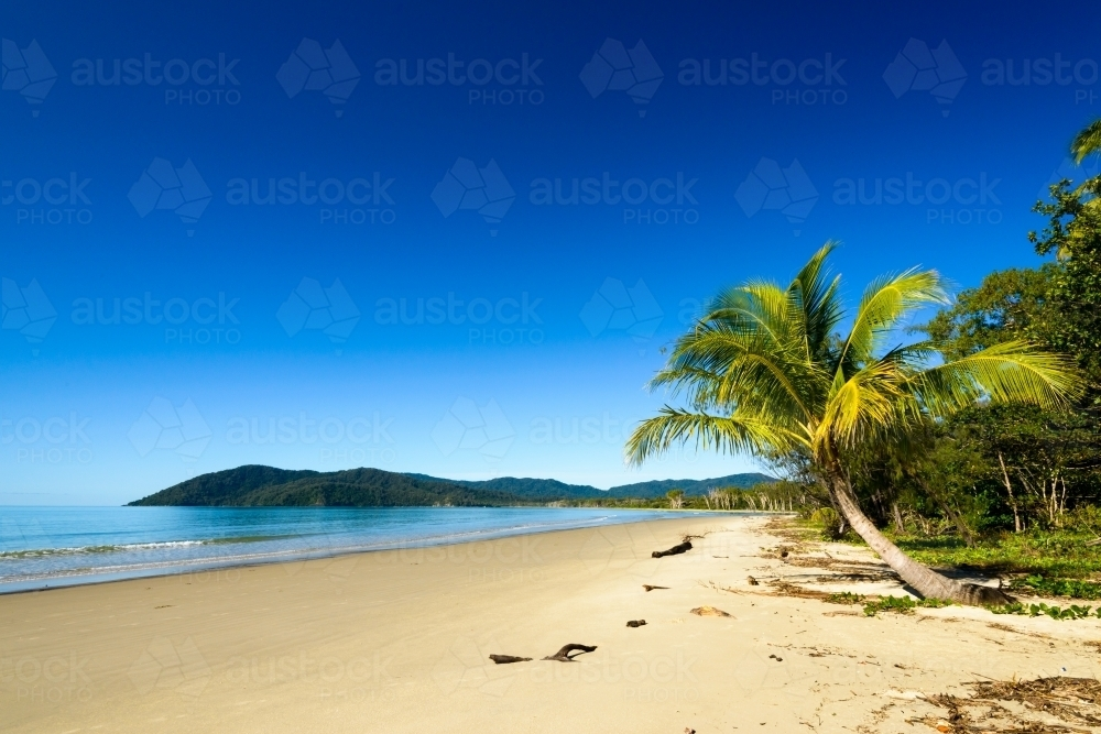 Image Of Beautiful Tranquil Tropical Beach Scene With Palm Tree