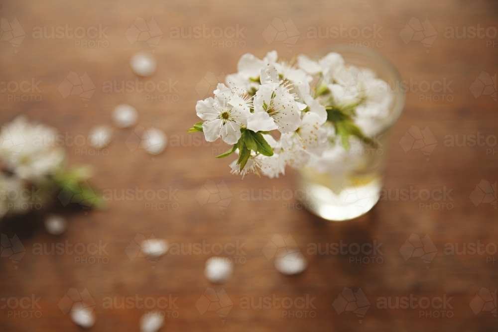 Blossom from a plum tree in a glass vase - Australian Stock Image