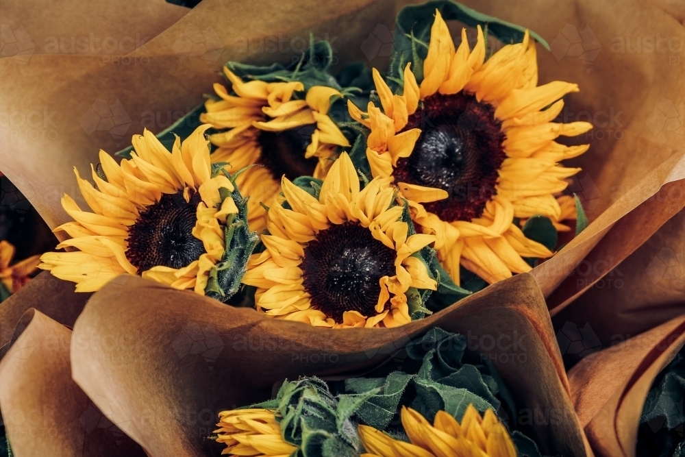 Image of bouquet of sunflowers wrapped in brown paper austockphoto bouquet of sunflowers wrapped in brown paper australian stock image mightylinksfo Gallery