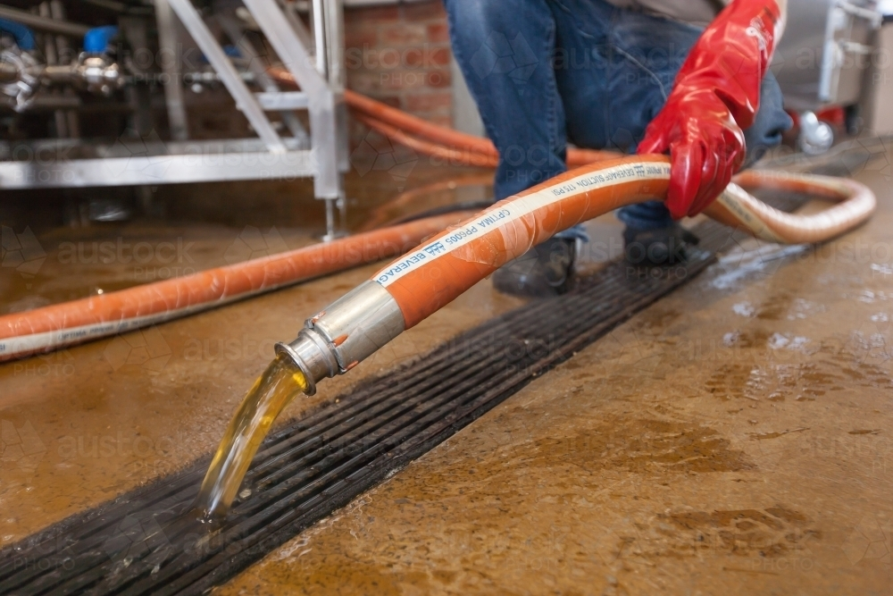 Brewer pouring waste water into drain - Australian Stock Image
