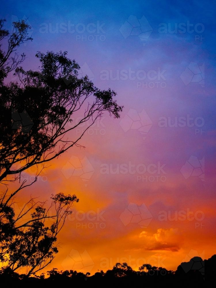 Bright colourful sunset with tree silhouette - Australian Stock Image