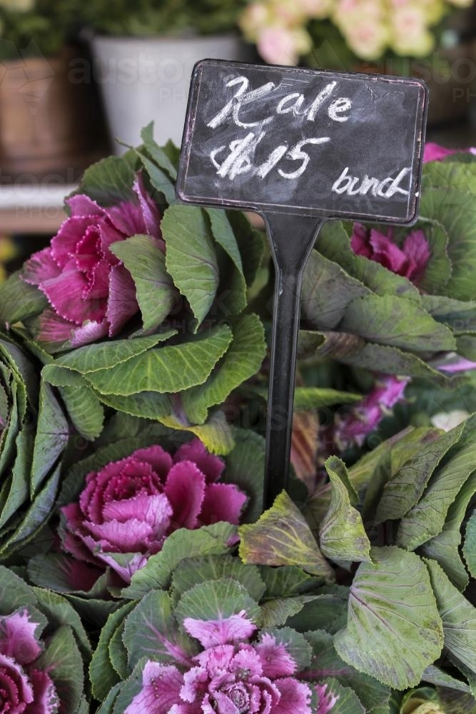 Bunch of fresh kale with pink flowers for sale at local market - Australian Stock Image