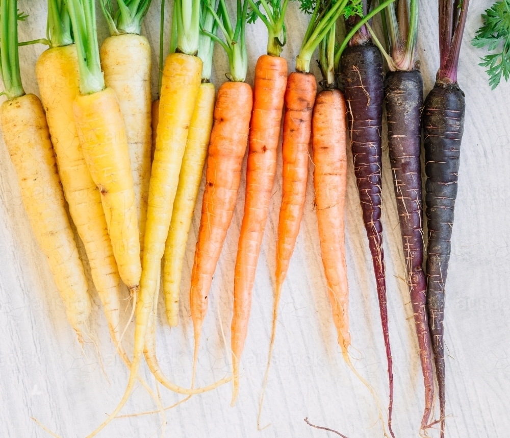 Bunch of raw heirloom carrots sorted by colour of yellow, orange and purple - Australian Stock Image