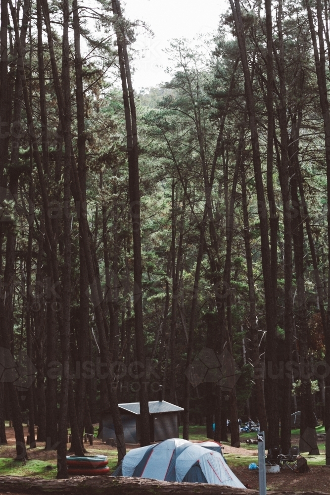 Campsite among tall trees - Australian Stock Image