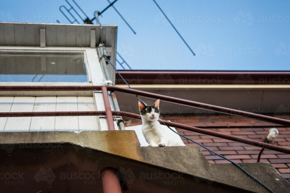 Cat looking down from balcony - Australian Stock Image