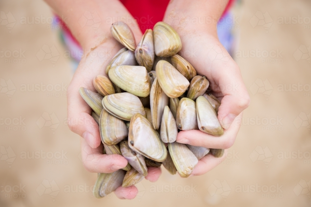 Child collecting cockles at the beach - Australian Stock Image