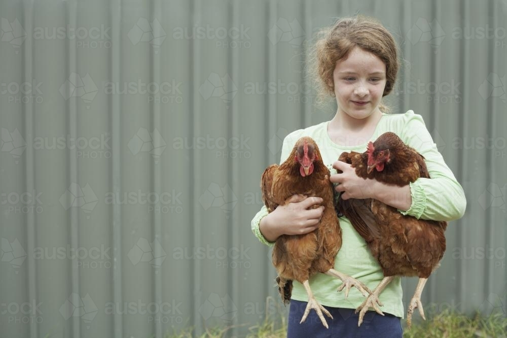 Child holding happy chickens - Australian Stock Image