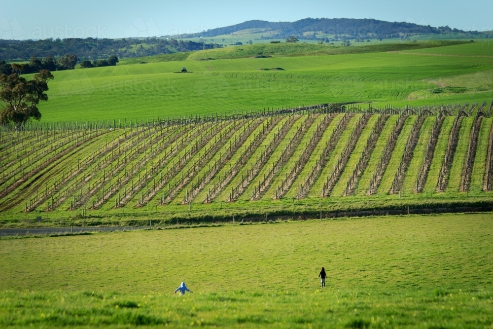 Children running through fields in Barossa Valley - Australian Stock Image