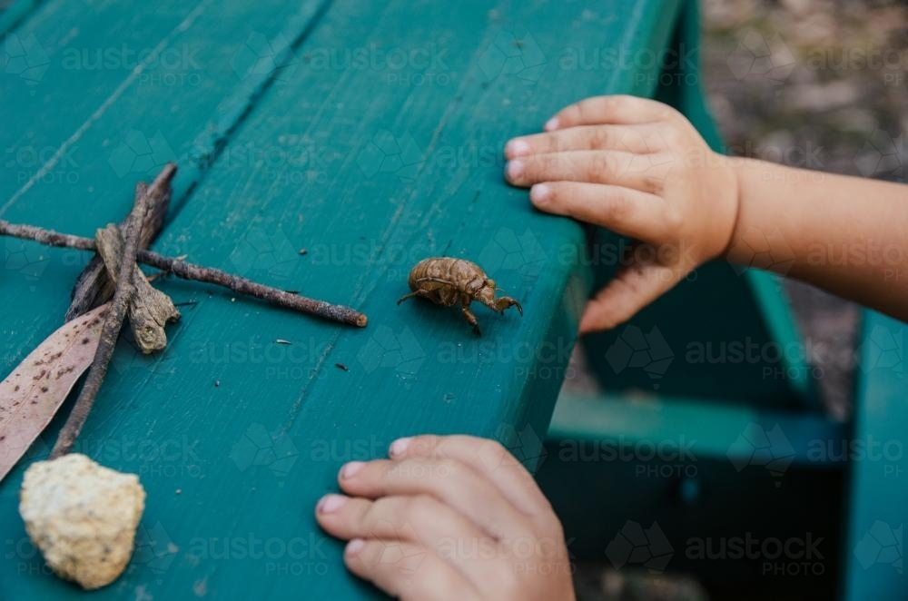 Cicada shell on a table - Australian Stock Image