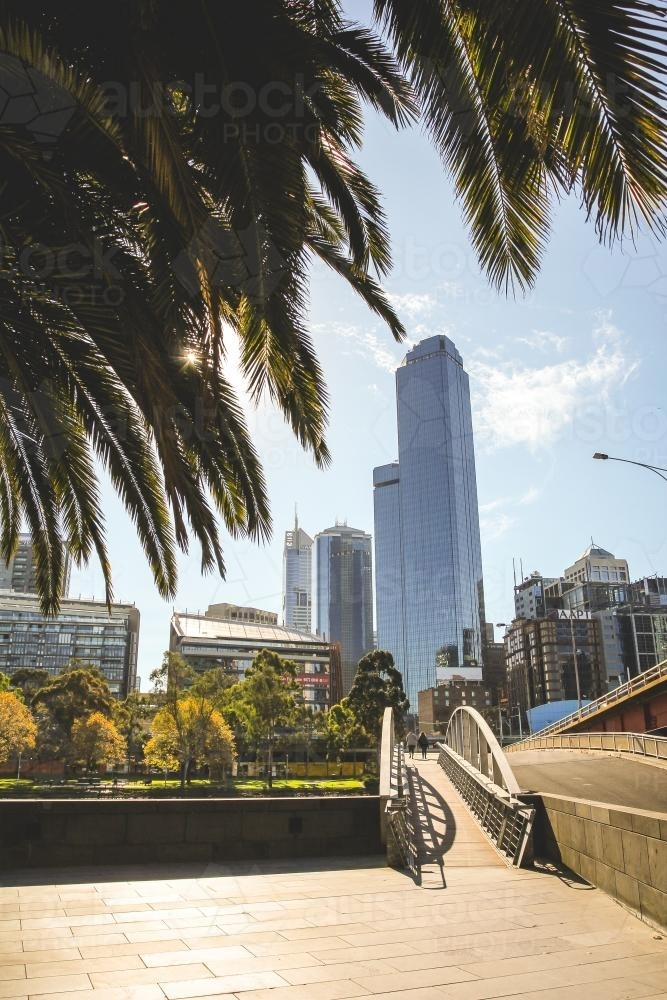 City skyline with bridge and palm trees in foreground - Australian Stock Image