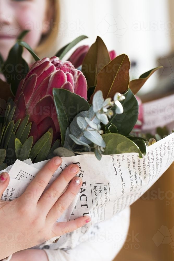 Close up of a young girl holding a bunch of pink proteas and native gum leaves - Australian Stock Image