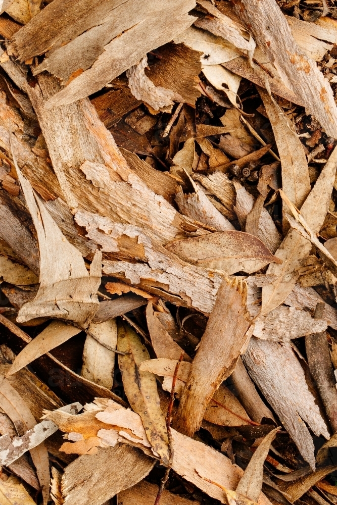 Closeup of tree bark and leaf litter - Australian Stock Image
