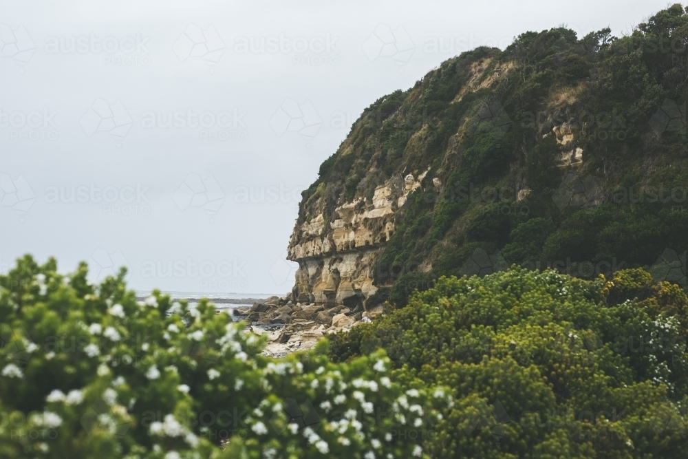 Coastal headland with flowering bushes in the foreground - Australian Stock Image