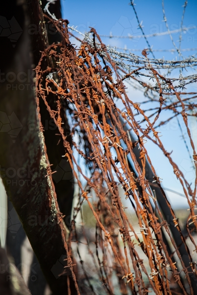 Image of Coils of rusted barbed wire in a disused cattle chute ...
