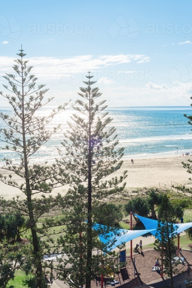 Coolangatta beach with pine trees and parkland - Australian Stock Image
