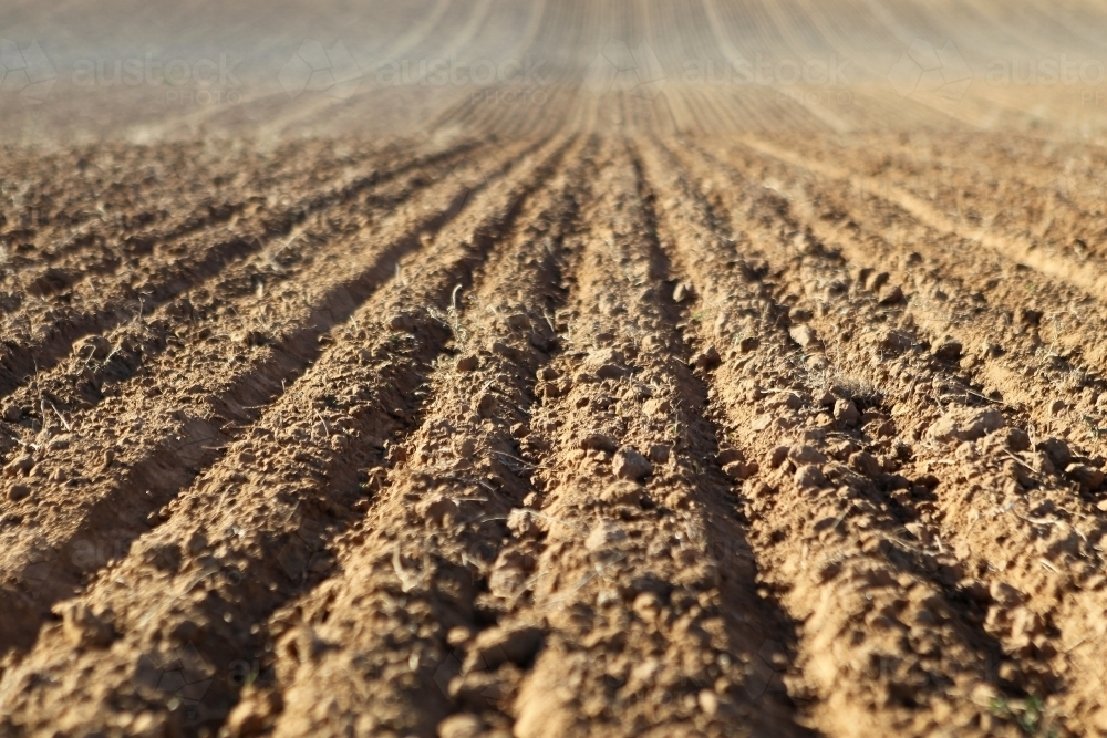 Cultivated soil - Australian Stock Image