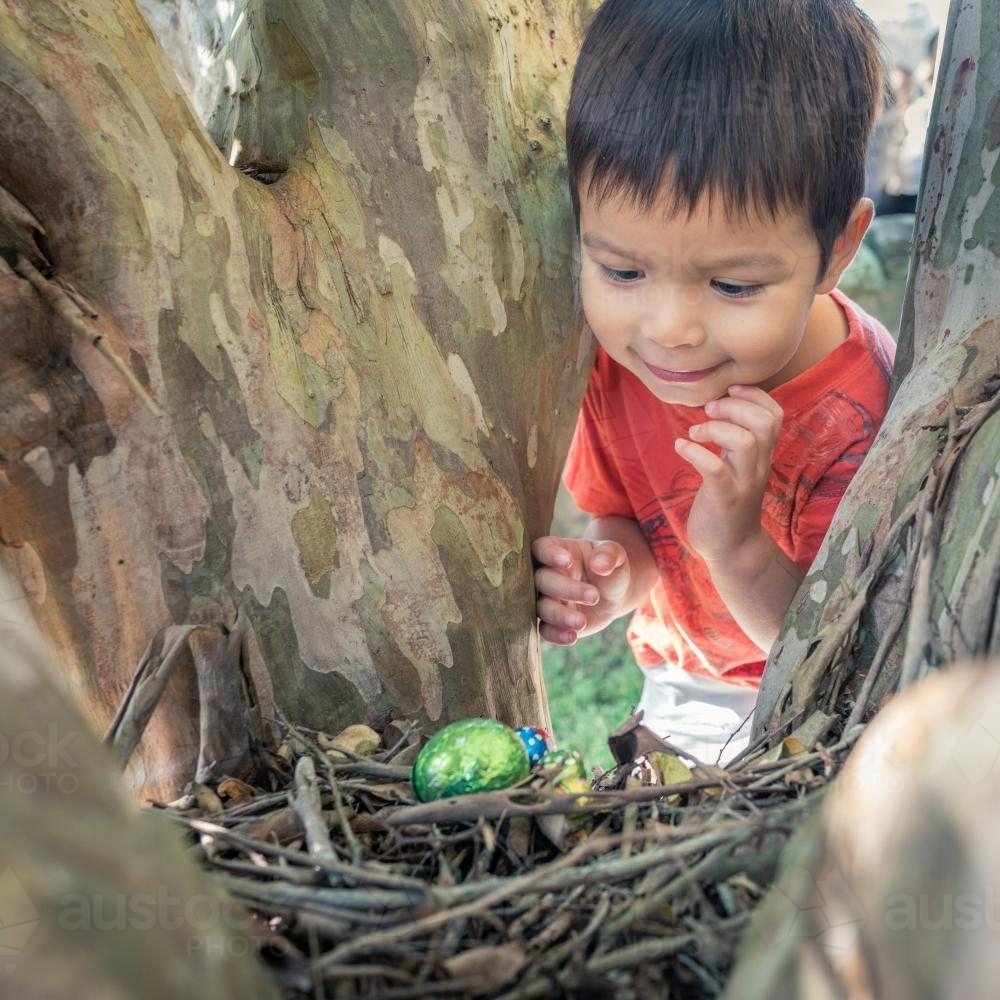 Cute 3 year old mixed race boy finds a chocolate egg on an Easter Egg Hunt - Australian Stock Image