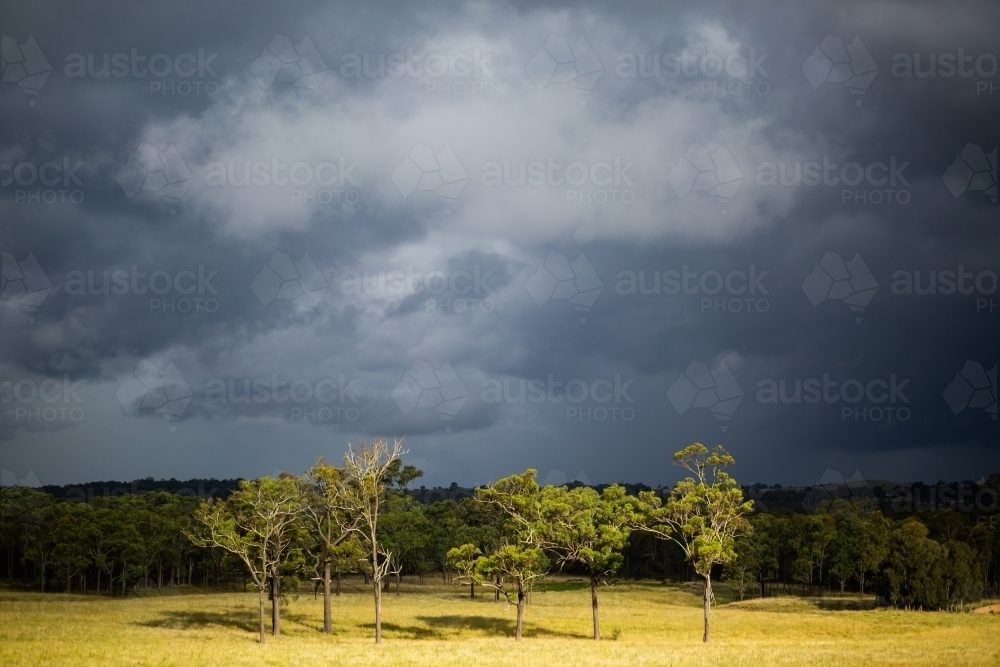 Dark black stormclouds rolling on over landscape of trees in rural paddock with sunlight grass - Australian Stock Image