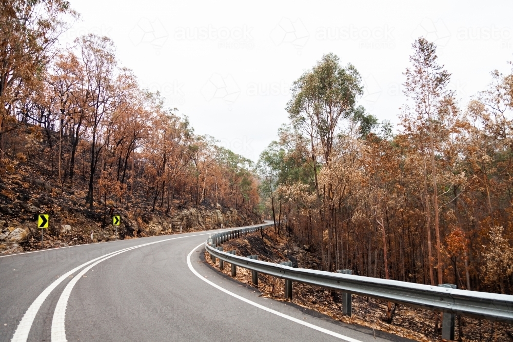 Dead trees burnt by fire on both sides of the Putty road - Australian Stock Image