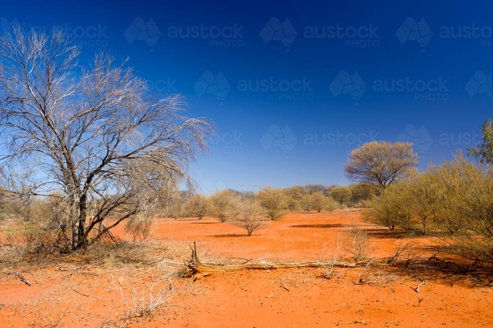 Desert scene with dry shrubs, dark orange sand and dark blue sky - Australian Stock Image