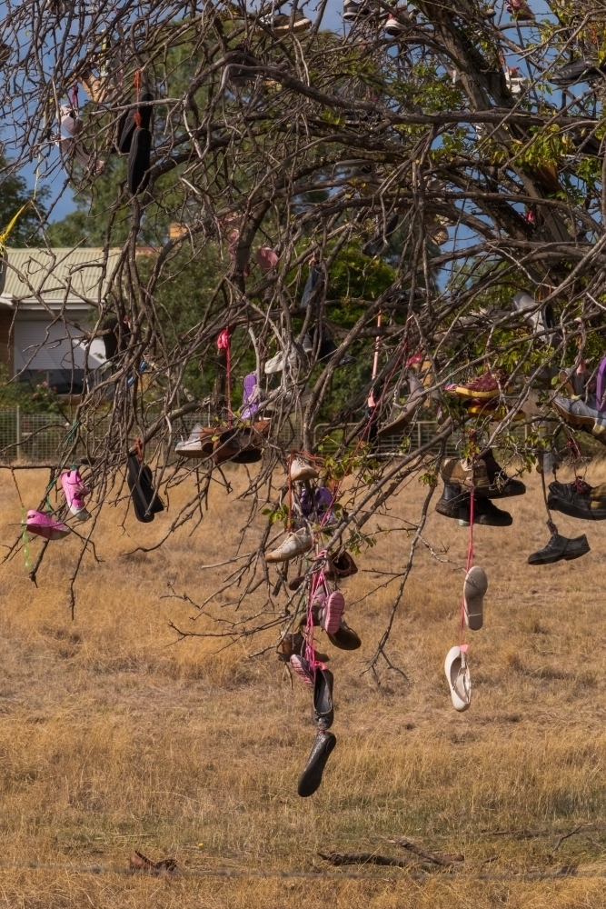 Discarded old shoes hung on tree - Australian Stock Image