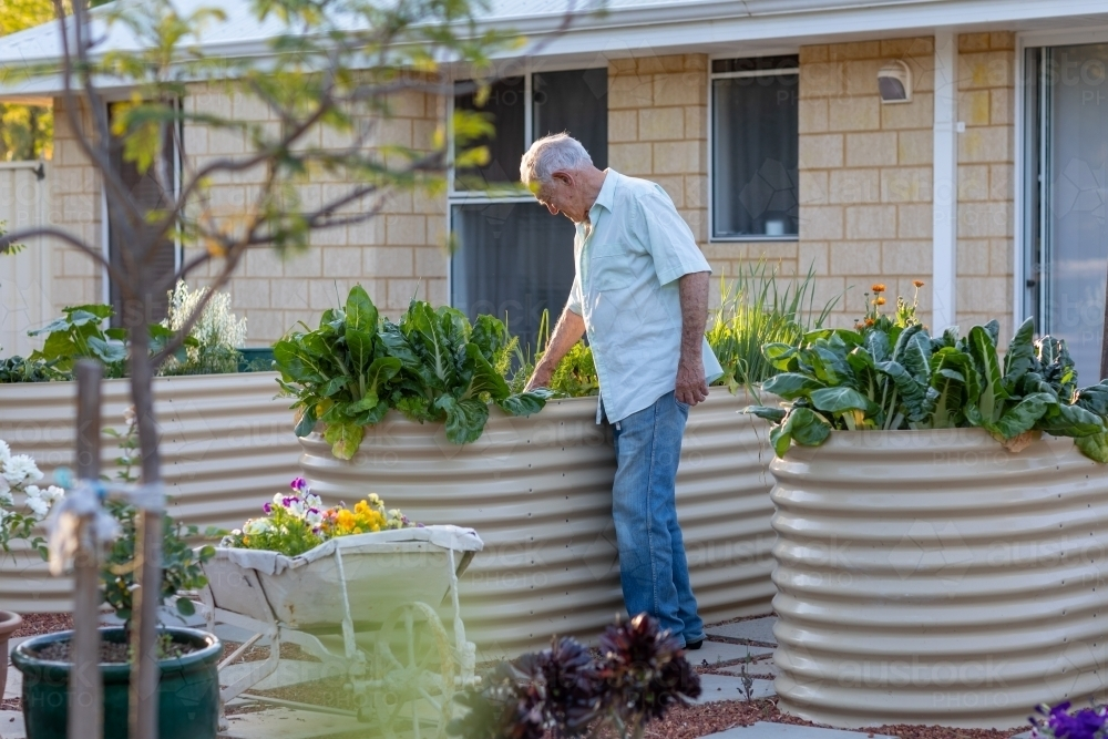 elderly man in his garden - Australian Stock Image