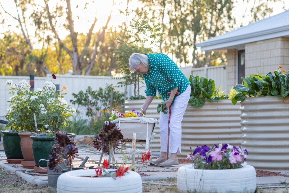 elderly woman pottering in garden - Australian Stock Image