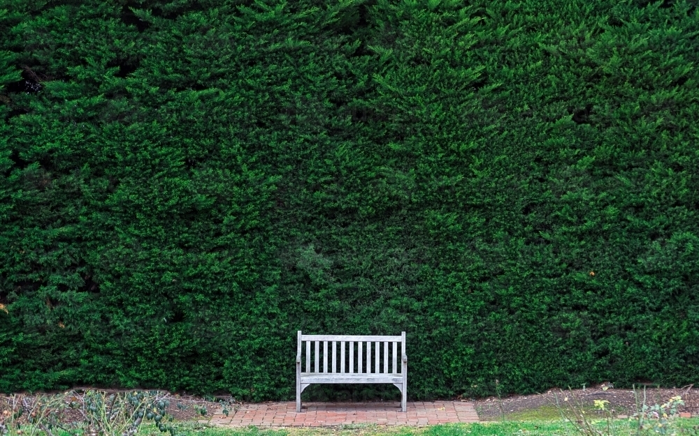 Empty park bench with a green hedge background - Australian Stock Image
