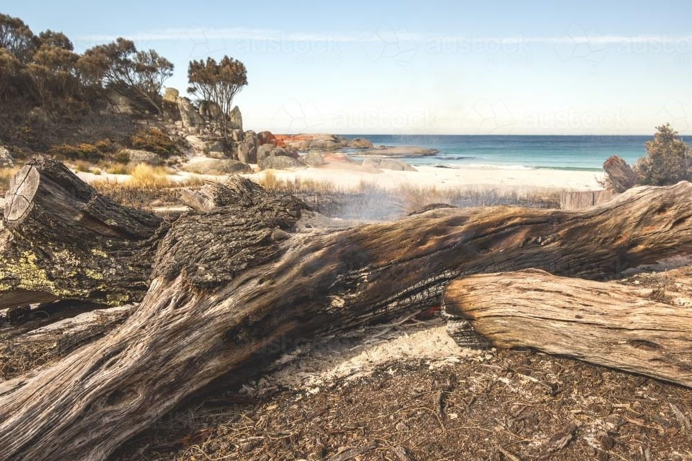 fallen tree on fire next to beach - Australian Stock Image