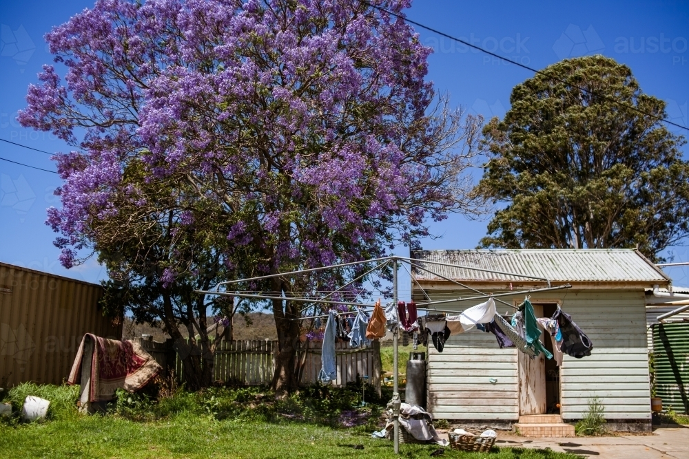 Family clothing dry in the wind on a hills hoist clothes line on under a vibrant jacaranda tree. - Australian Stock Image
