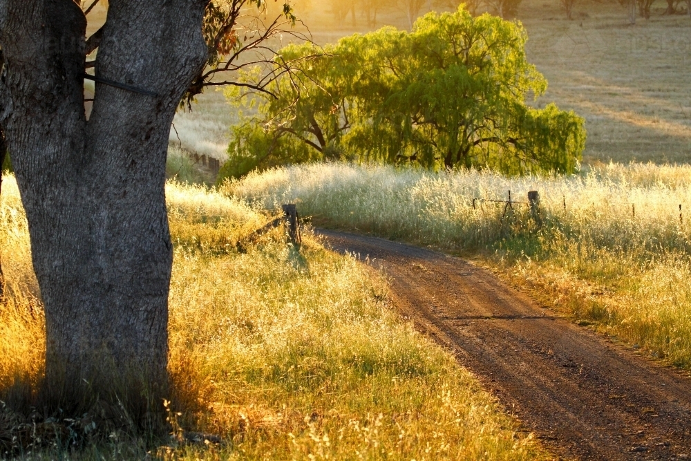 Farm driveway in rural dawn light - Australian Stock Image