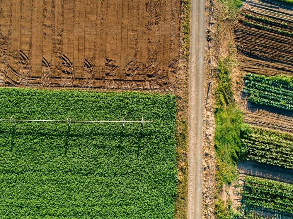 Farm paddock of crops with driveway and empty soil - Australian Stock Image