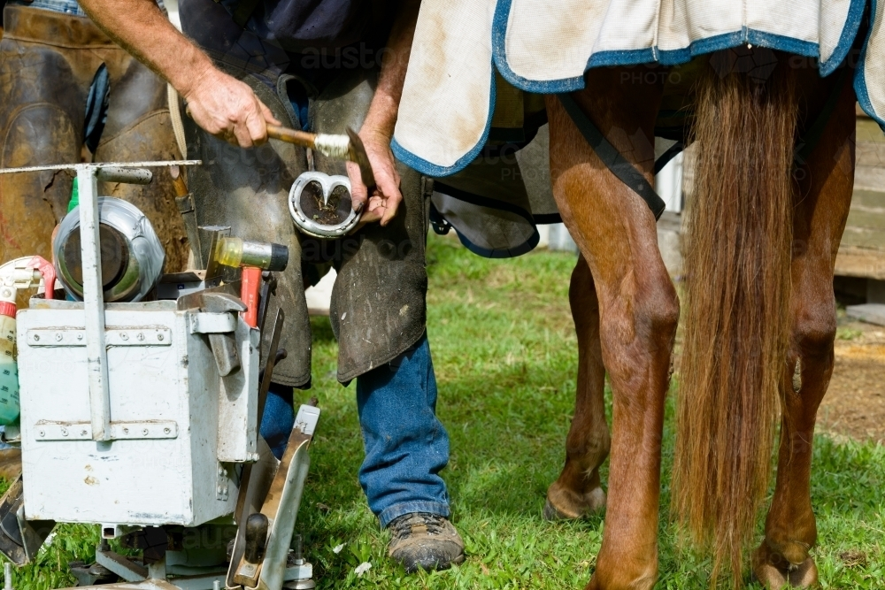 Farrier with tool box shoeing a horse - Australian Stock Image