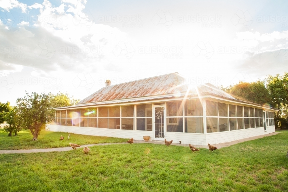 Free range chooks in front of country homestead on a farm - Australian Stock Image
