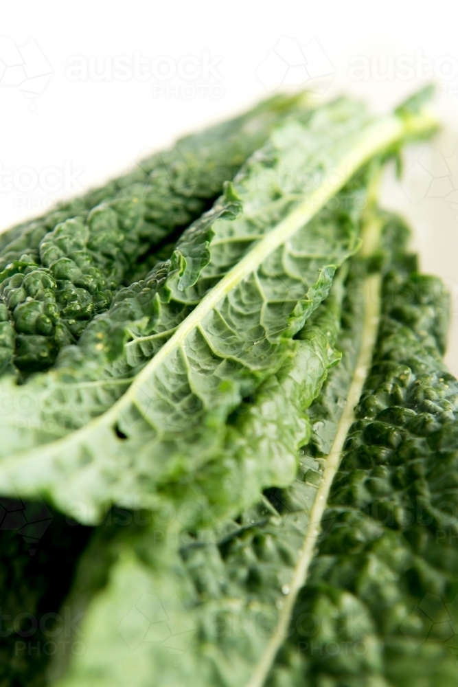 Fresh green kale on white - Australian Stock Image