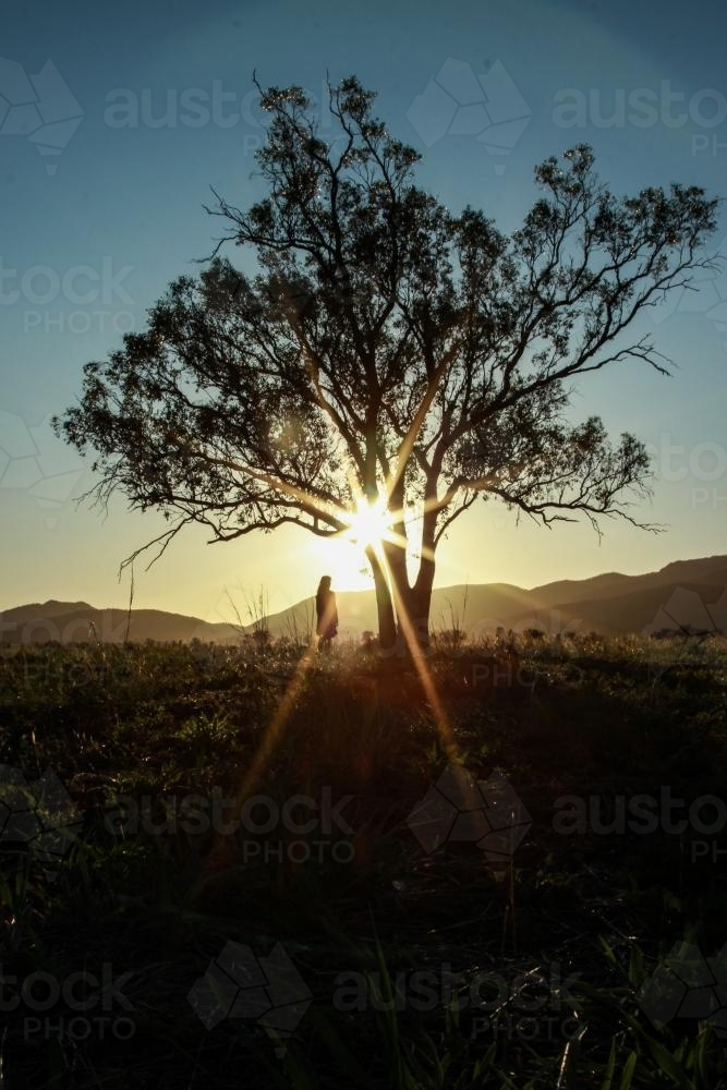Girl and tree silhouetted in sunrise over a mountain, sun shines through branches - Australian Stock Image