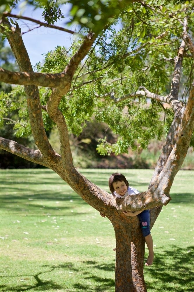 Girl climbing a tree in a park - Australian Stock Image
