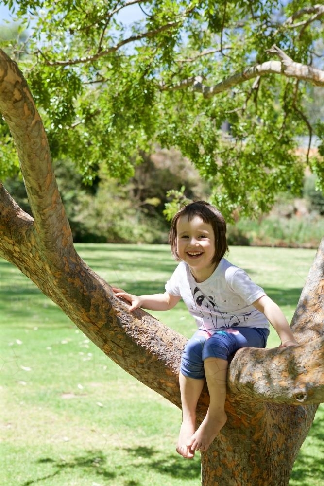 Girl climbing and sitting in a tree in a park - Australian Stock Image