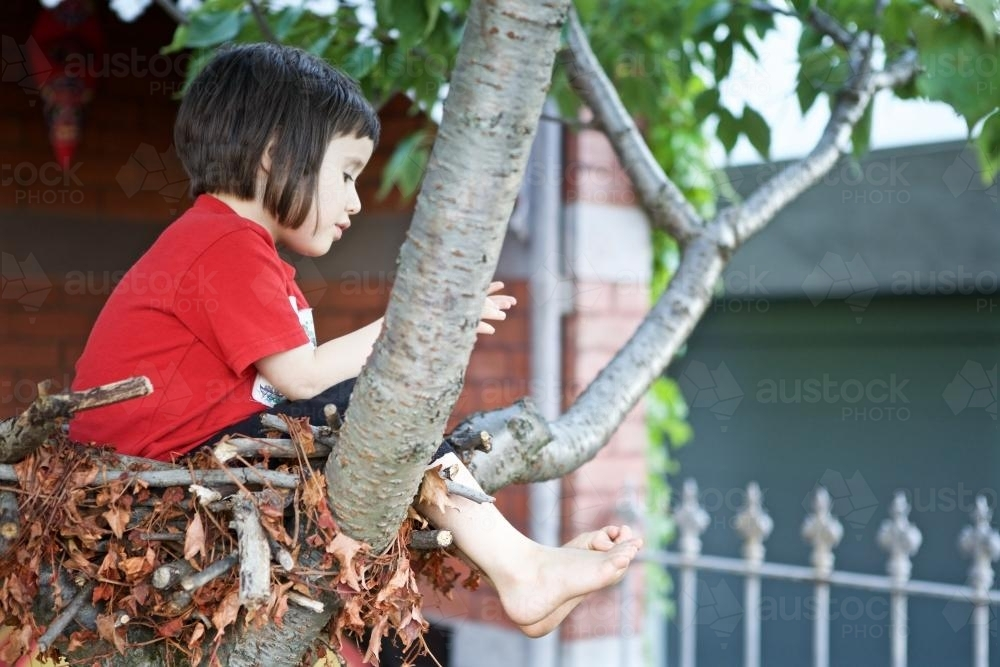 Girl sitting in a tree in the front garden of a terrace house - Australian Stock Image